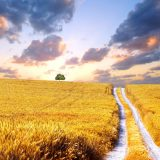 Wallpapers for Desktop with harvest, background, road, wallpaper, wheat, widescreen, field